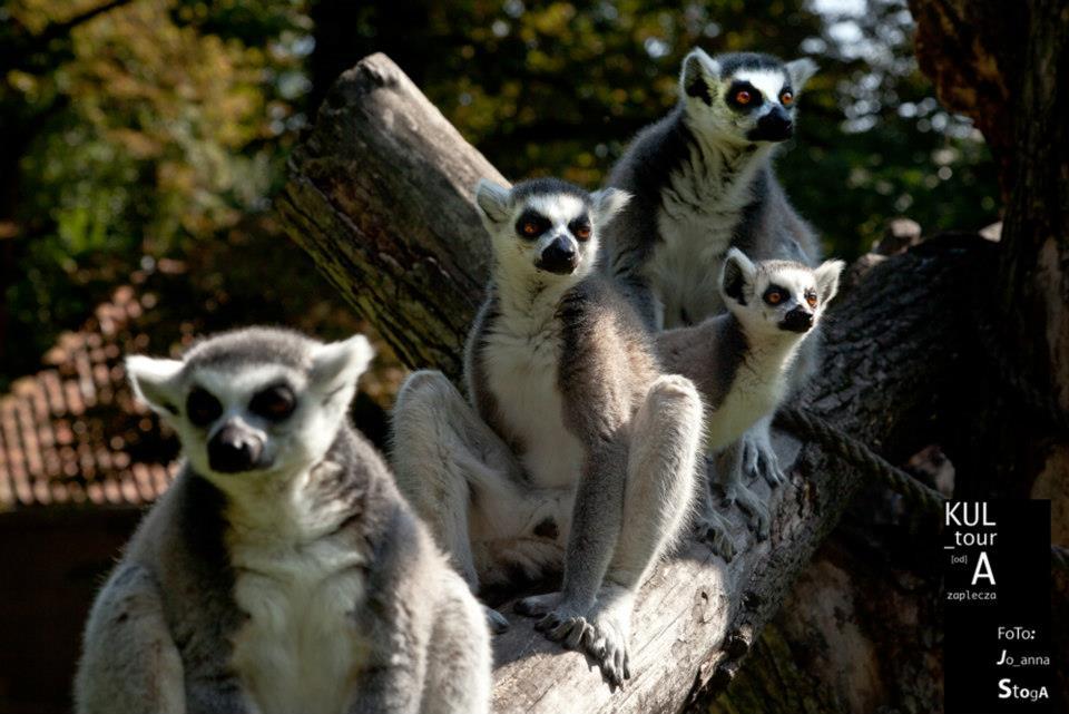 Wrocławskie Zoo Afrykarium Pik Punkt Informacji