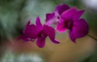 Zima w Ogrodzie Botanicznym   fotorelacja