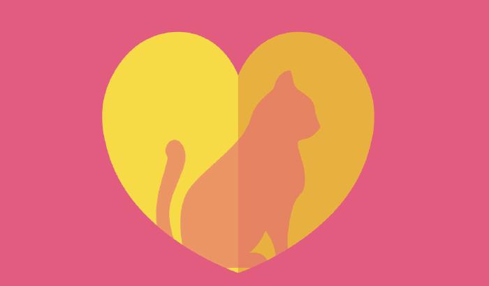 Do zakochania jeden kot | wystawa