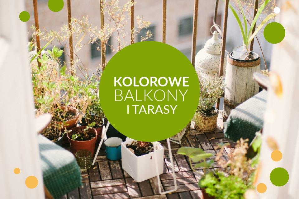 Kolorowe Balkony i Tarasy - ekspozycja i kiermasz roślin balkonowych w Ogrodzie Botanicznym