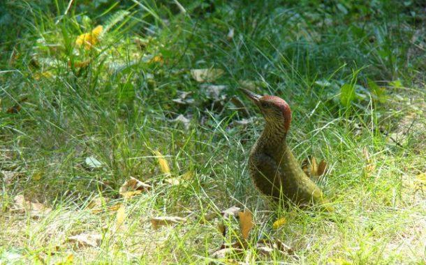 Szlakiem ptaków | cykl weekend na Dolnym Śląsku