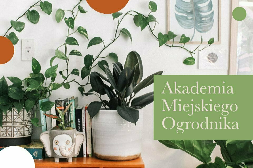 Akademia Miejskiego Ogrodnika - sezon 9.