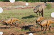 Wystawa Dinozarów w Ogrodzie Botanicznym