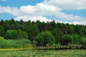 Arboretum Leśne im. prof. Stefana Białoboka