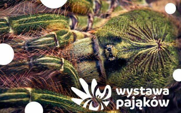 Wystawa pająków i skorpionów we Wrocławiu